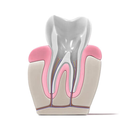 root canal procedure - 02